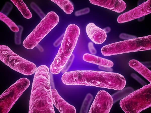 Water Treatment Blog | Legionella Remediation